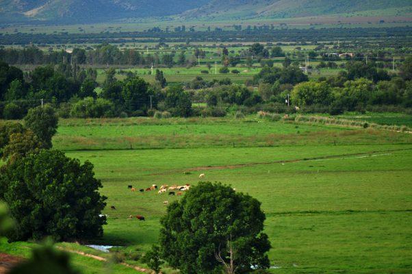 "Lluvias de ""Willa"" benefician al campo duranguense"