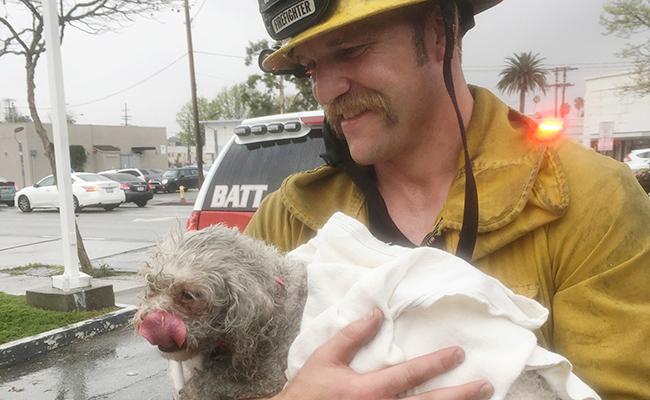 Bomberos de California  reaniman a un perro