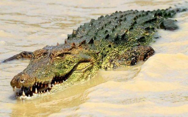 Cocodrilo mata a pastor mientras bautizaba a un grupo de fieles en un río