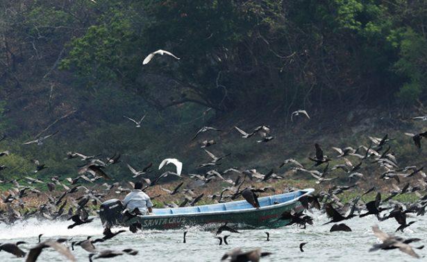 Pescadores se pelean las presas con aves invasoras