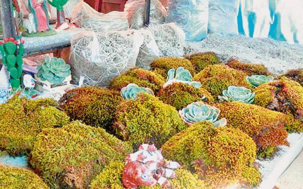 Venden musgo y heno ilegal en mercados de Chiapas