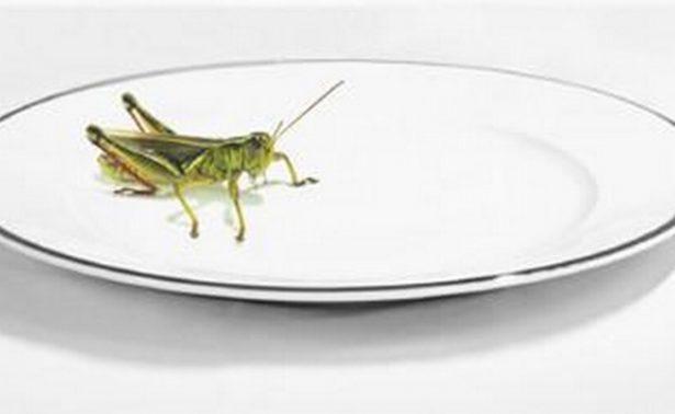 ¿Por qué no regresar los insectos a nuestras mesas?