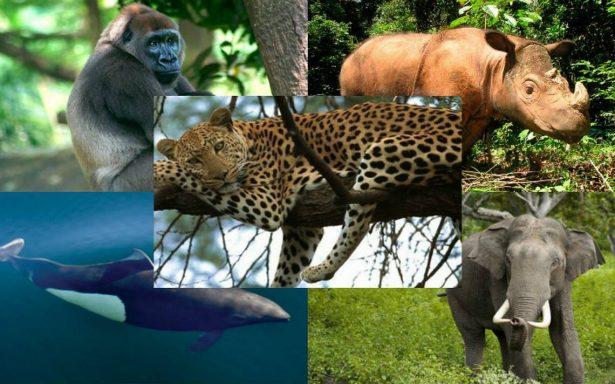 10 animales que están en peligro crítico de extinción