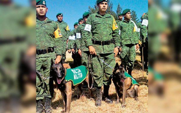 Perros cumplen una bonita labor, rescatan personas