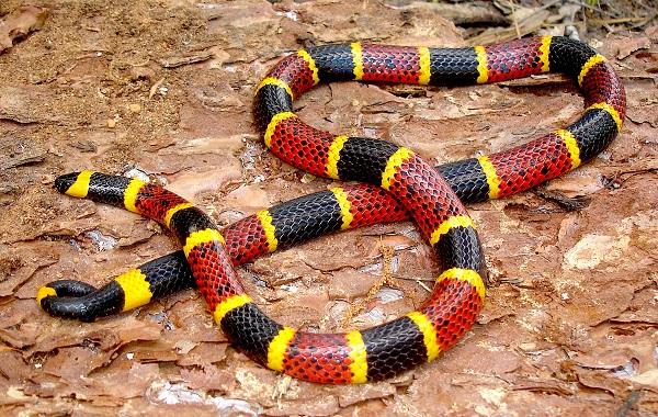 Más casos de mordedura de serpiente