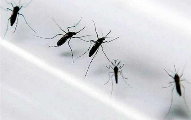 Dos probables casos más de zika en Issste