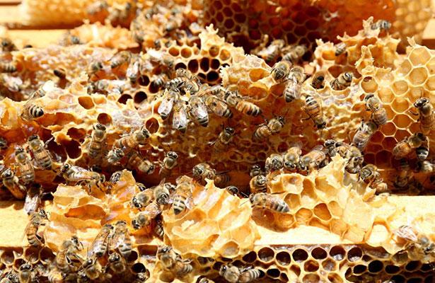 Descubren propiedades de la miel contra males crónicos