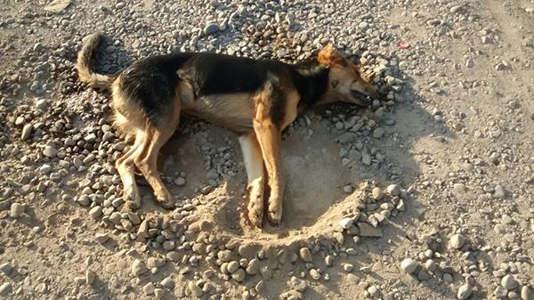 Asesinan a perro con rifle de postas