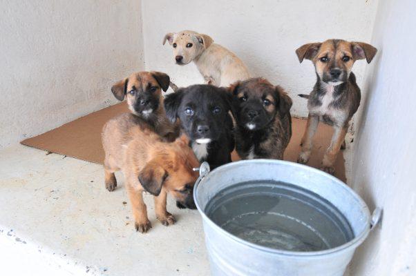 Aumenta el número de reportes de sensibilización canina