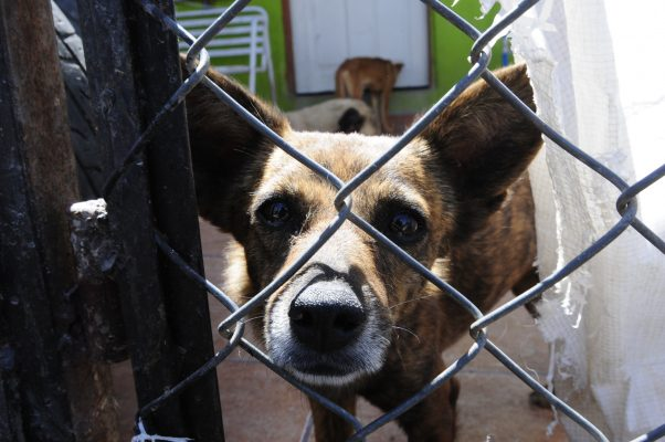 Aumentan reportes de maltrato ante Centro de Atención Canina