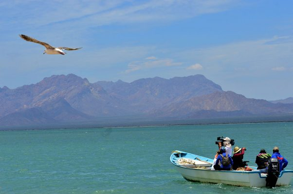 [GALERÍA] Conoce el cautivante paisaje de Punta Chueca
