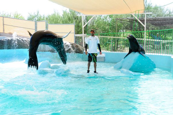 show de animales en el Delfinario Sonora