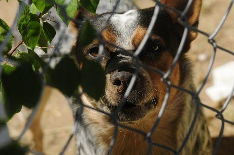 7A -Foto 5 -Perro Guardian-Sergio Gomez (2)