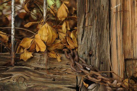 7A - foto 4 - otoño