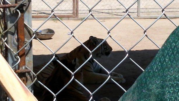 Buscan hacer un zoológico al sur de la ciudad