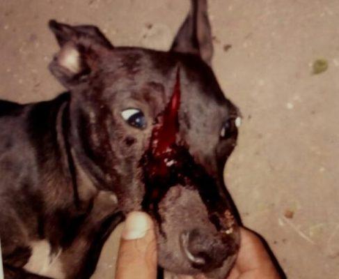 Logran primer vinculación a proceso por maltrato animal