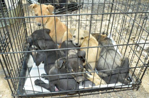 Amplían instalaciones en Centro de Atención Canina y Felina