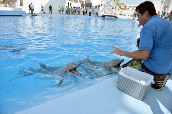 Espera Cedes resultados de la causa de muerte de delfín