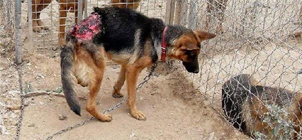 Procesan por delito de maltrato animal