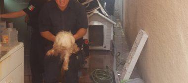 (Galería) Sofoca Policía local y Bomberos un incendio en Los Portales