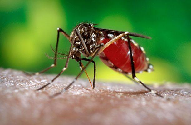 Detectan múltiples brotes autóctonos de zika en Sonora