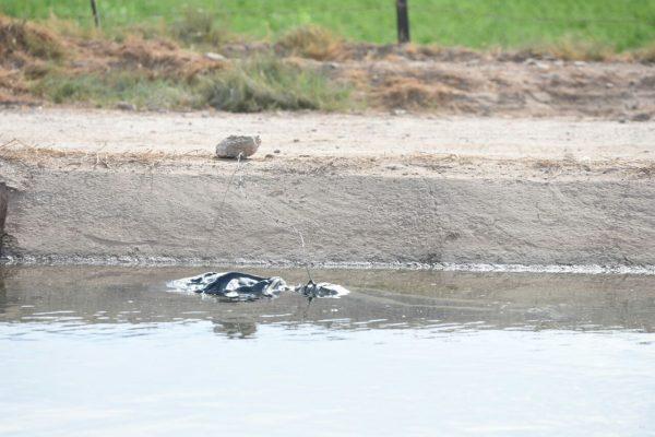 Anciano muerto amarrado de pies y manos, flotó en canal Independecia