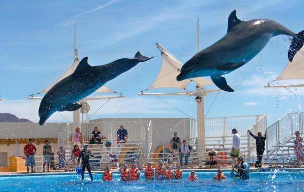 No hay planes de traer un nuevo cetáceo al Delfinario Sonora
