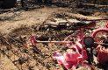 Casas consumidas por el fuego col Laura Alicia Frias-Sergio Gomez (9)
