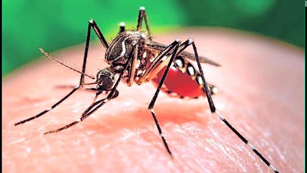 Suman 23 casos de zika en Sonora