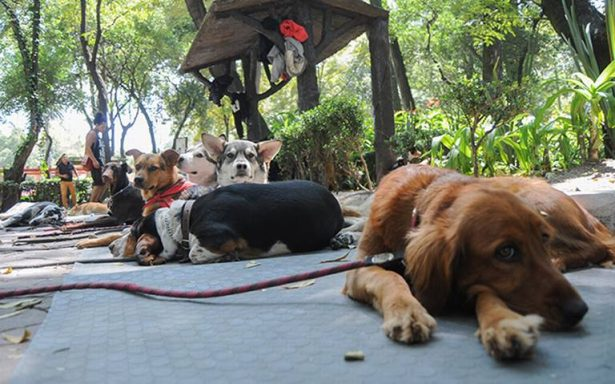 Los perros también padecen la demencia senil