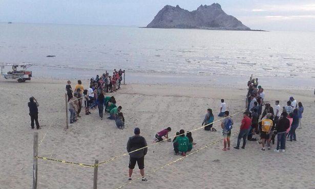 Liberan a 65 tortugas marinas en Bahía de Kino