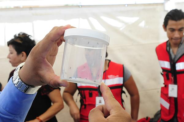 Tiene 2017 más casos de zika