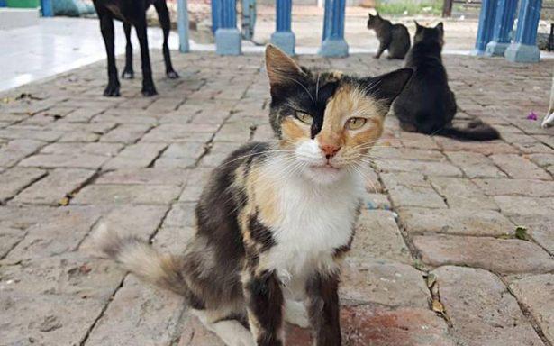 Plaga de gatos callejeros invade el sur de Tamaulipas