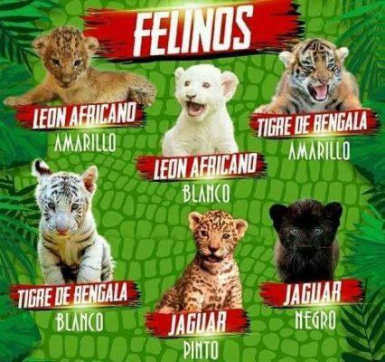 Sonora: Animales exóticos en venta en veterinarias e internet
