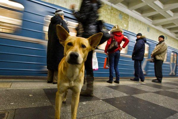 """Denuncian masacre de perros callejeros para """"limpiar"""" ciudades rusas por Mundial de futbol"""