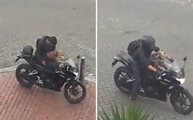 [Video] Perrito motociclista y su dueño enamoran al mundo