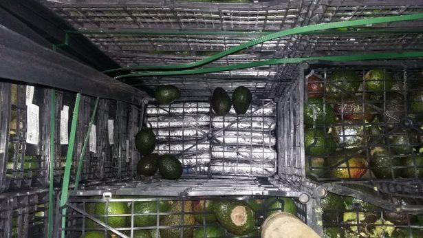 Transportaban cargamento de drogas entre aguacates