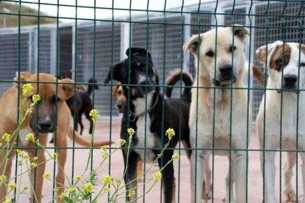 Pata de Perro busca crear la Procuraduría de Defensa de los Animales