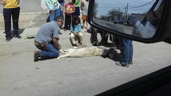 Fallecen dueño y mascota tras pelea de perros