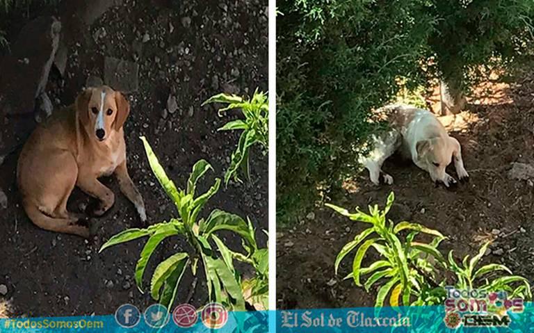 Denuncian a mujer por cortarle las patas a sus perros porque rascaban su jardín