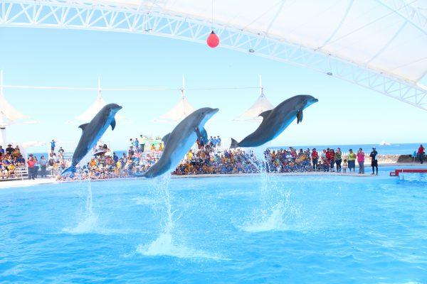 Centro Ecológico, Delfinario y Estero El Soldado listos para vacaciones de verano