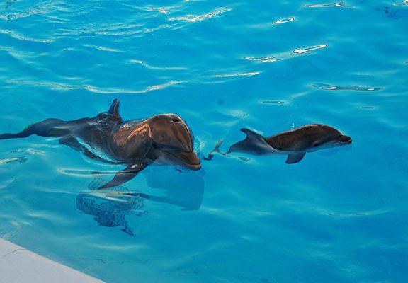 [Galería] Muestra bebé delfín buen estado de salud