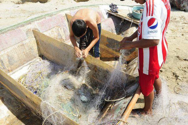 Terminaría veda de camarón en septiembre