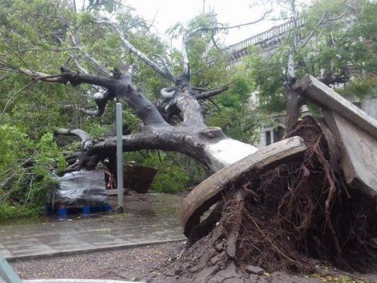 De raíz arrancó #Sergio varios árboles de espacios públicos