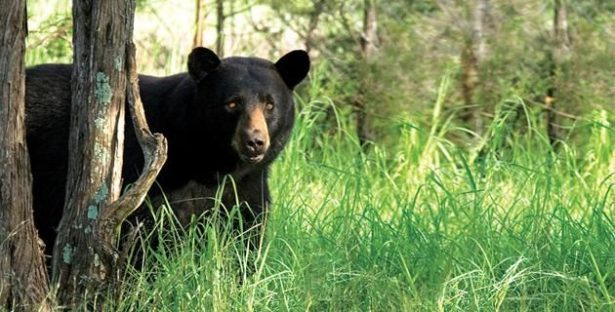 Celebra WN exhorto para pasos de fauna