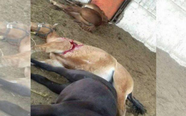 Un muerto y 12 caballos acribillados, deja ataque a rancho de supuesto socio de Tomás Yarrington