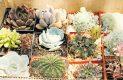 UNAM implementa la clonación de plantas como contraataque a la extinción