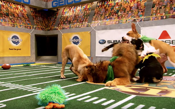 ¡Suave touchdown! Conoce el Puppy Bowl, la edición perruna del #SBLII