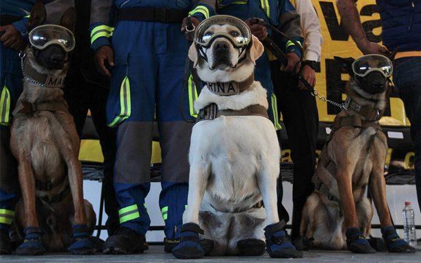 "Construirán clínica ""Frida"" en honor a perros rescatistas en Coyoacán"