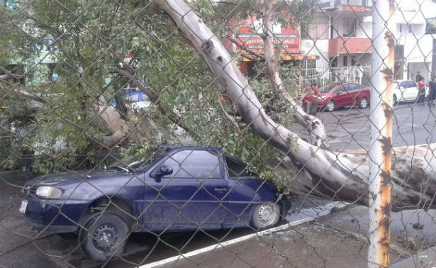Enorme árbol cae y destroza autos en Tamaulipas